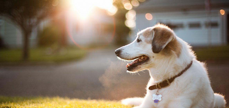 desktop-hd-pics-of-the-cutest-dog